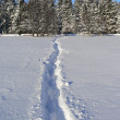 Winter footpath — Stock Photo