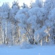 The frozen trees - Stock Photo