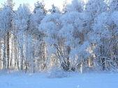 De bevroren bomen — Stockfoto