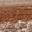 Plowed field sienna red with dried clods - Stock Photo