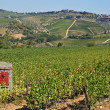 Stock Photo: Hillside vineyards in Tuscany