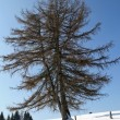 Stock Photo: Solitary tree in snow in winter in ItaliAlps