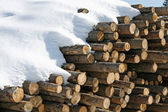 Stacks of logs cut by loggers in the snow in the mountains — Stock Photo
