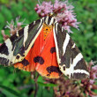 Orange and black butterfly on a flower 1 — Stock Photo