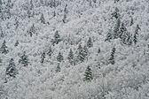 Snowy white trees in the mountains on a cold winter — Stok fotoğraf