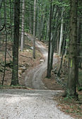 Path in the dense forest of trees in the Tuscan hills in Italy — Stockfoto