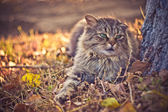 Village cat — Stock Photo