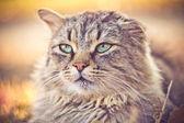 Village cat — Stock Photo