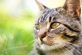 Katze auf grünem hintergrund — Stockfoto
