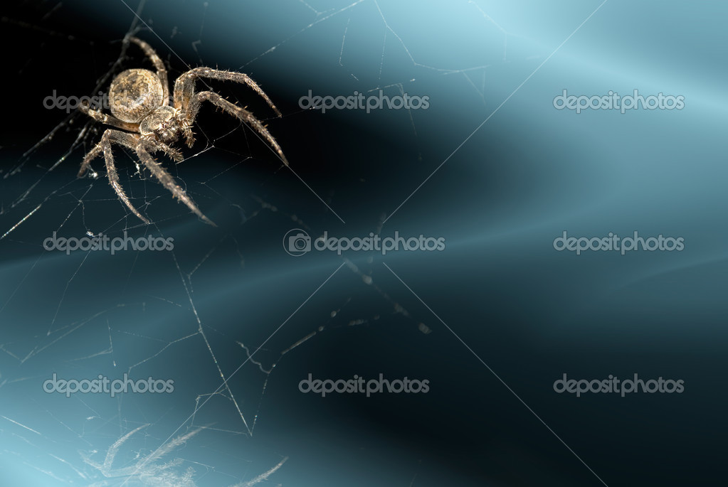 Abstract dark blue background with spider in corner  Stock Photo #7235235