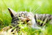 Cat on green grass — Stock Photo