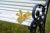 Oak leaves on the old white bench — Stock Photo