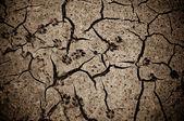 Wolf tracks in dry mud — Stock Photo