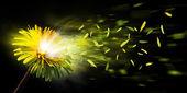 Exploding dandelion — Stock Photo