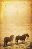 Horse Background — Stockfoto