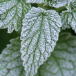 stinging nettles — Stock Photo