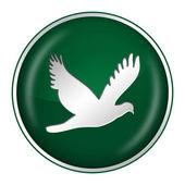 Green dove — Stock Photo
