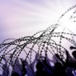Barbed wire - Stockfoto