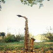 Old grungy saxophone — Stock Photo