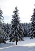 冬冬季 — ストック写真
