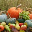 Harvested fresh vegetables and fruits — Stock Photo