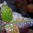 Autumn leaf with water droplet — Stock Photo