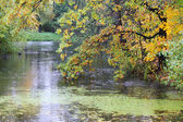Autumn trees near the pond — Stock Photo