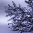 Silver branch of fir tree — Foto Stock