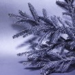 Silver branch of fir tree — Stock Photo