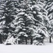Snowy fir trees — Stock Photo #7840088