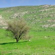 Golan heights. — Stock Photo