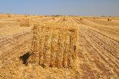 Haystacks. — Stock Photo