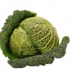 Isolated savoy cabbage — Stock Photo