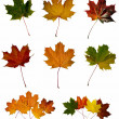 Maple leafs — Stockfoto