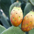 Prickly pear on cactus — Stock Photo #7278421