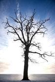 Silhouette of bare tree — Stock Photo