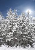 Bosque en invierno — Foto de Stock
