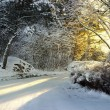 Rural road in winter — Stock Photo #7176176