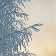 Stock Photo: Tree with hoar frost