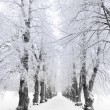 Trees in hoar frost — Stock Photo #7177144