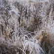 Field wit ice crystals — Stock Photo