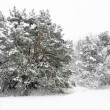 Trees in blizzard — Stock Photo