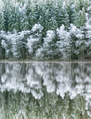 Reflected trees — Stock Photo