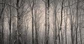 Trees in winter — Stock Photo