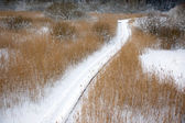 Swamp in winter — Stock Photo