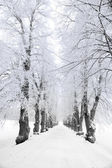 Trees in hoar frost — Stock Photo