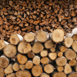 Stock Photo: Pile of firewood