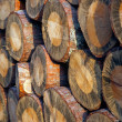 Pile of logs — Stock Photo