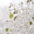 Green leaves in winter — Stock Photo