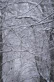 Blauwe bomen — Stockfoto
